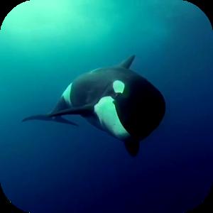 Orca 3d Video Wallpaper Apprecs