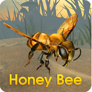 Honey Bee Simulator icon