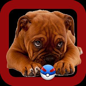 Pocket doggy Go icon