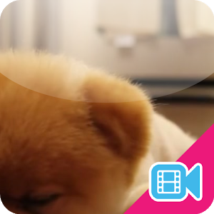 ► Lazy Puppy Live WallPaper icon