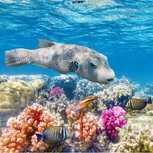 Underwater World Jigsaw icon