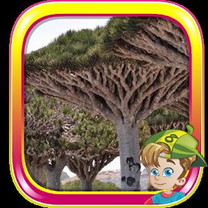 Escape From Socotra Island icon