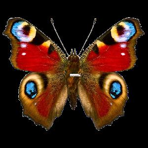 Butterflies PRO Live wallpaper icon