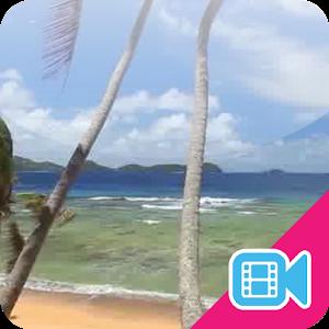 Beach Palms Live WallPaper icon