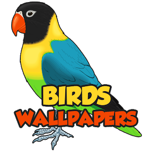 Birds Wallpapers HD icon