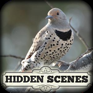 Hidden Scenes - Winter Birding icon