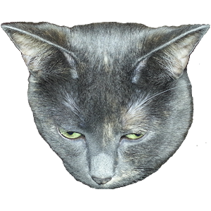 Weird Cat Sounds icon