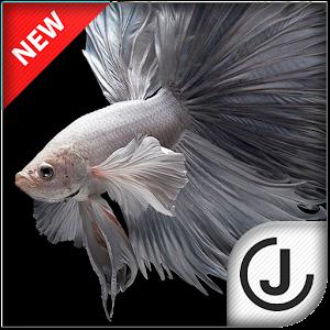 Betta Fish HD icon