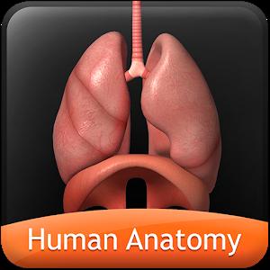 HumanAnatomy-RespiratorySystem icon