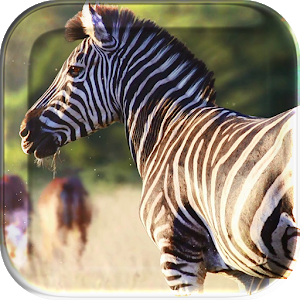 African Animals Live Wallpaper icon