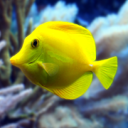 Aquarium live wallpaper (HD video animation) icon
