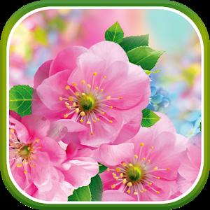 Spring Flower Live Wallpaper Icon
