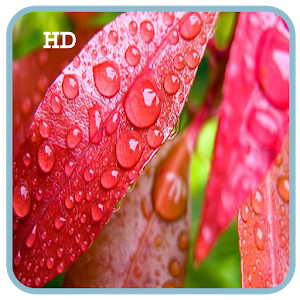 S6 Rain Drop HD LiveWallpaper icon