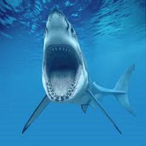Shark Week Countdown icon