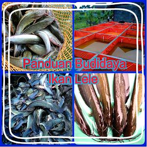 Panduan Budidaya Ikan Lele icon
