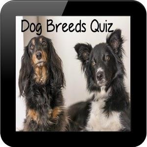 Dog Breeds Quiz icon