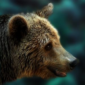 Bear Escape icon