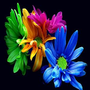 wallpaper flowers icon