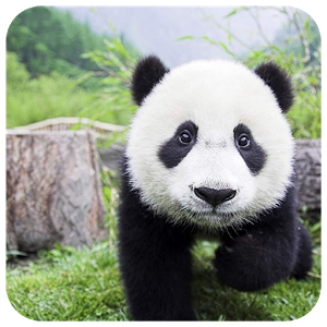 Giant Panda Jigsaw icon