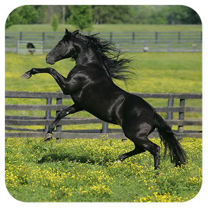 Horse Games icon