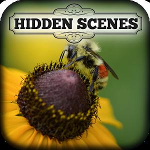 Hidden Scenes - My Little Bees icon
