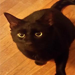 Cat Laser icon