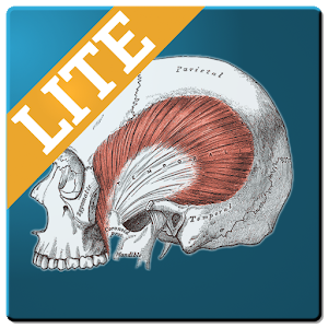 Muscle Memory Lite icon
