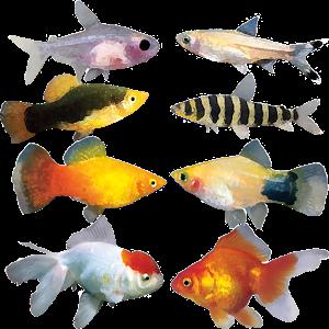 A8 Fish Slot Machine icon